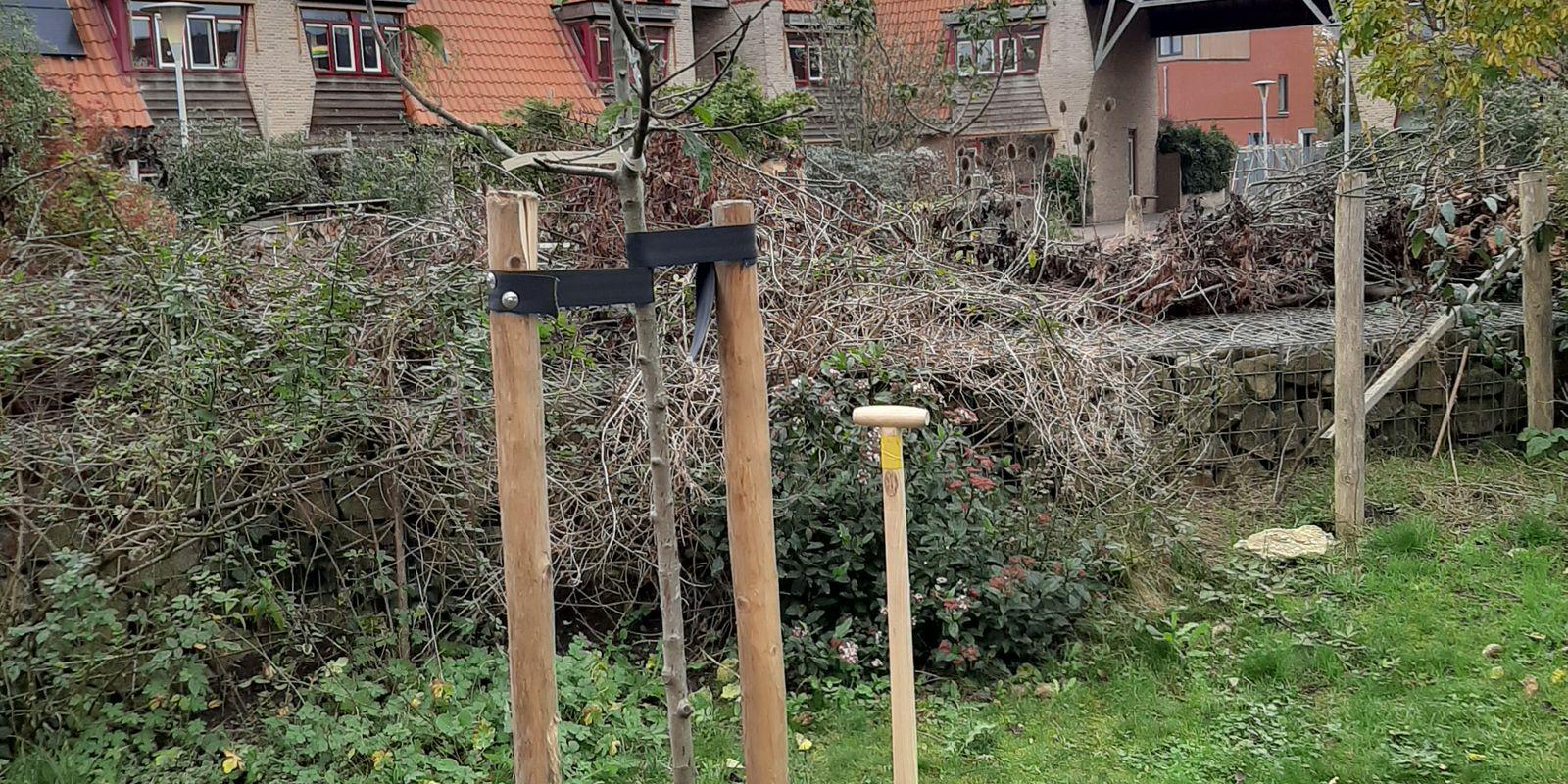 aanplant appelboom Meanderhof