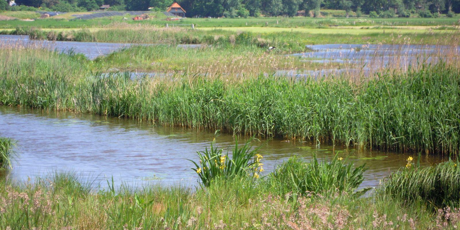 horte-landschap-water