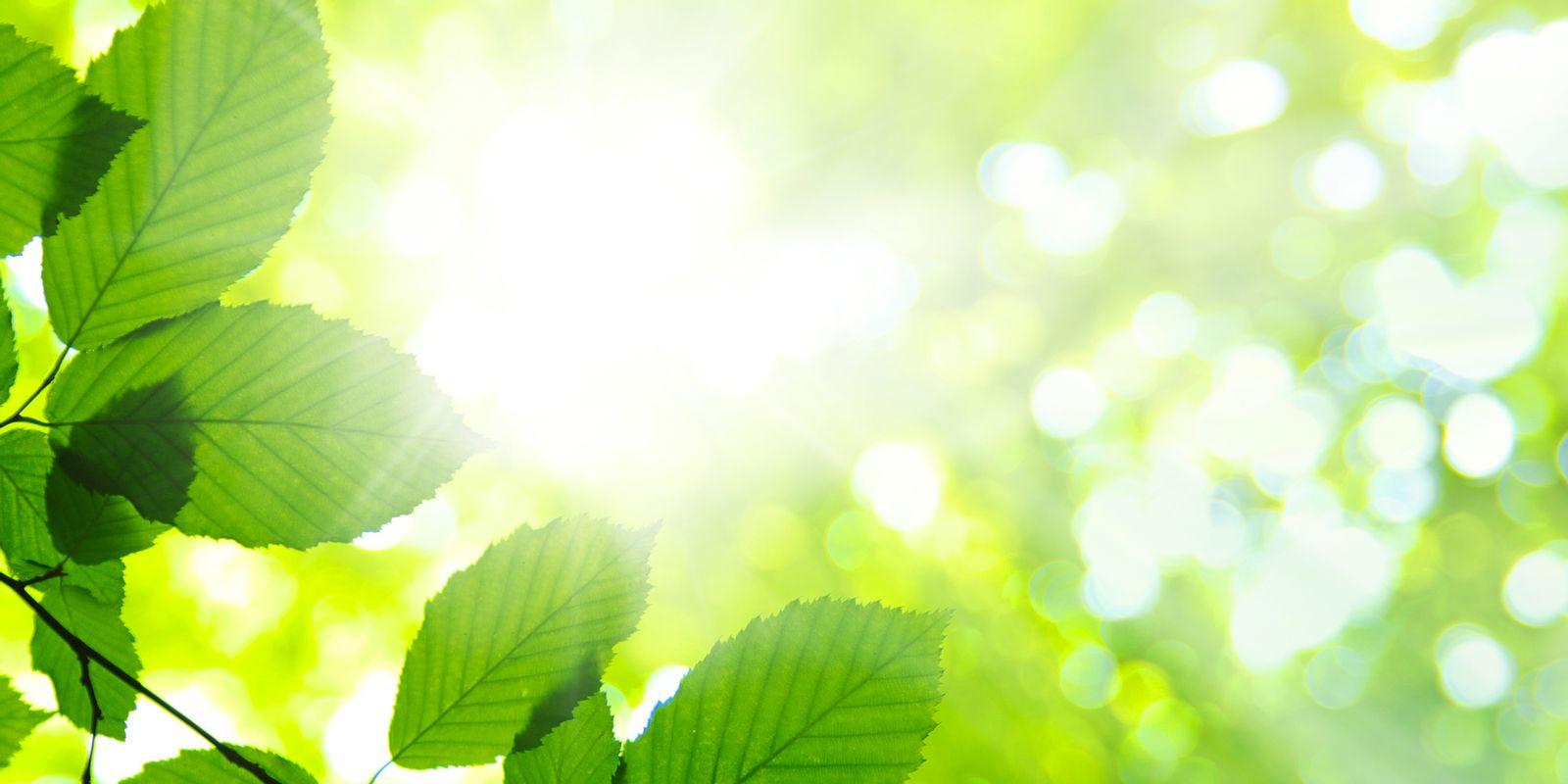 bladeren-zonlicht-lr-9
