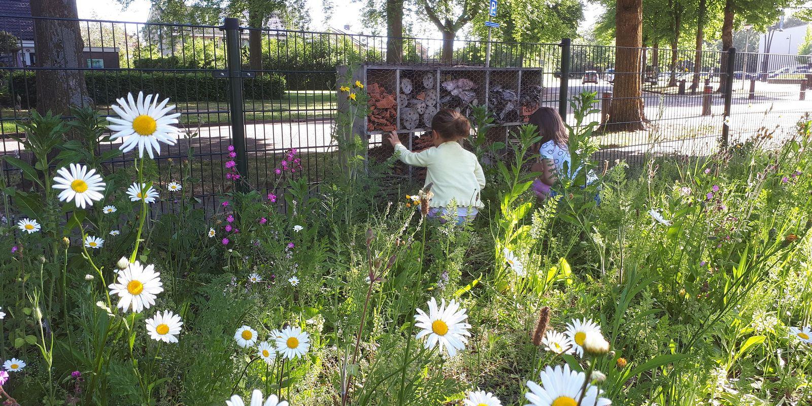 Bijenplek bij basisschool Het Avontuur in Dalfsen - Marije Ruijter