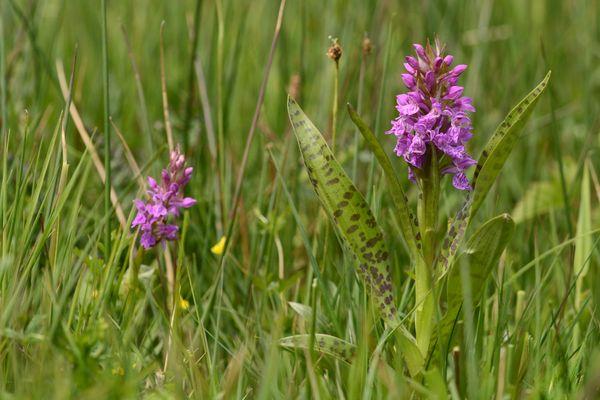 Wandelen in het Dal van de Mosbeek, orchideeën kijken