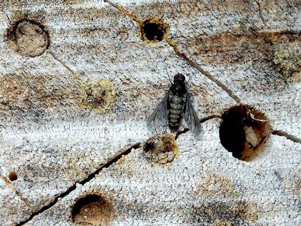 op een insectenhotel