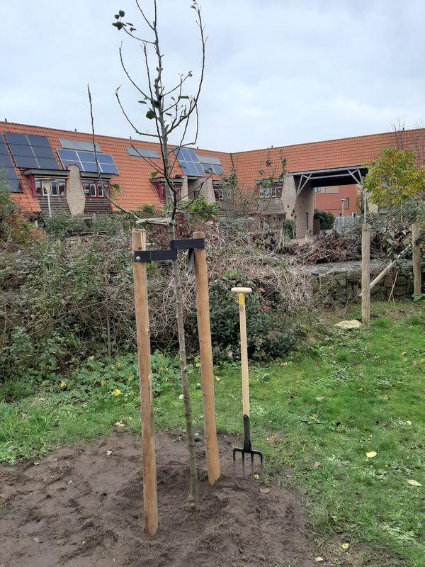 bomen aanplant in Overijssel