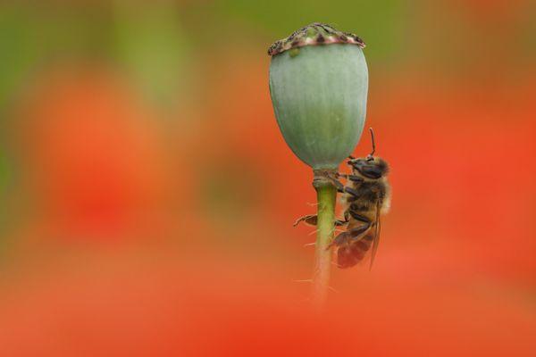 Van landelijke bijentelling 2021 naar een plaatselijk bijeninitiatief