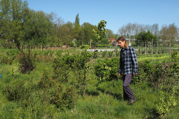 Tweeluik voedselbossen: Zwolle