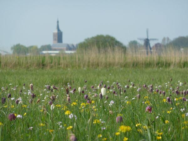cursus wildeplanten IVN Zwolle