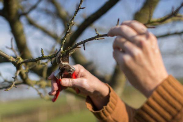 Vormsnoei voor jonge bomen