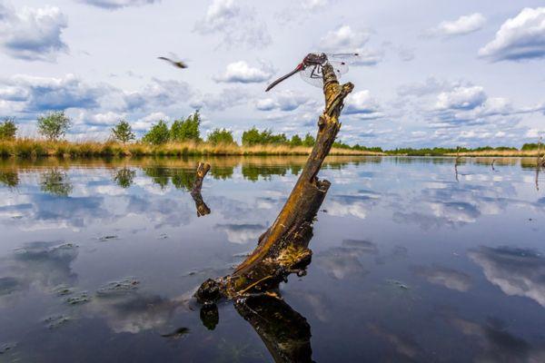 Boek 'Libellen in Overijssel'