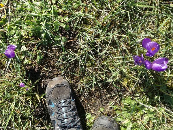 Lekker wandelen in de lente