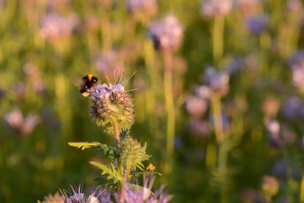 Bloemen zijn belangrijk voor insecten