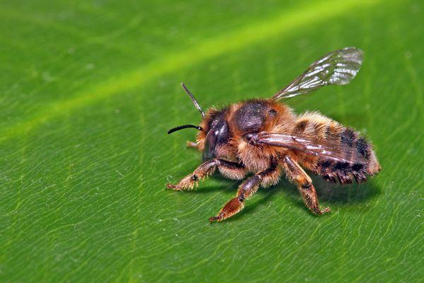 Familie Eppink creeert bijenidylle