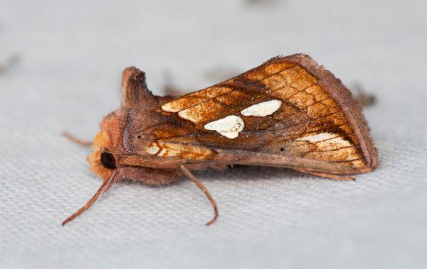 bijzondere vlinder