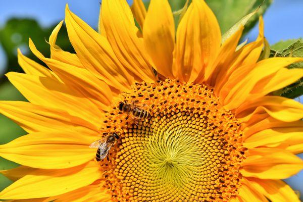 Steeds meer bijenplekken in Overijssel