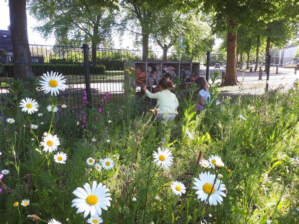 Warm welkom voor rosse metselbijen bij basisschool Het Avontuur