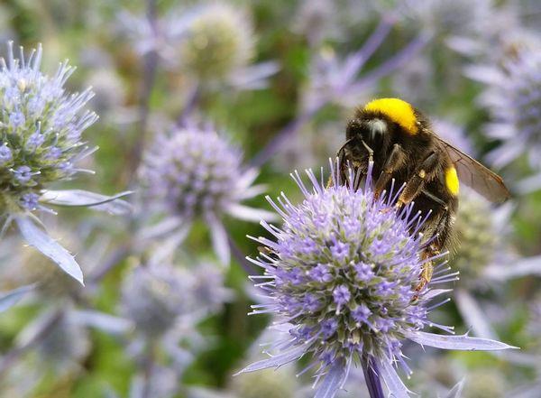 Bijen bijten bloemen en Maaien hoeft niet (zo)