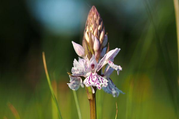 orchidee met duidelijk herkenbare lip