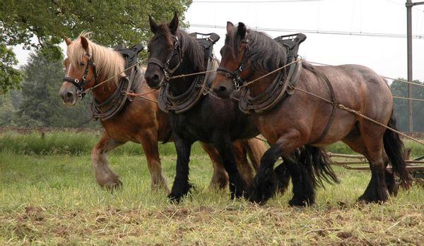 Fraaie werkzaamheden met het paard