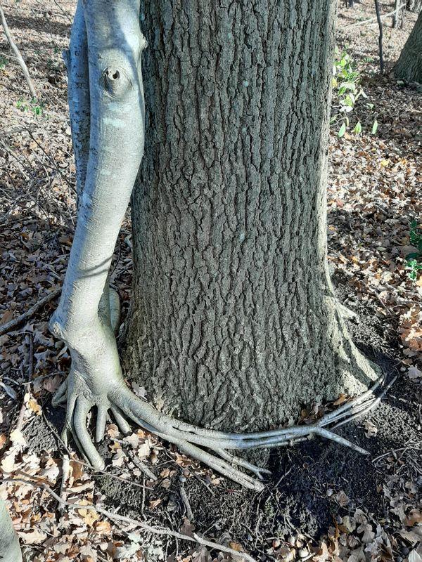 bomen is passie