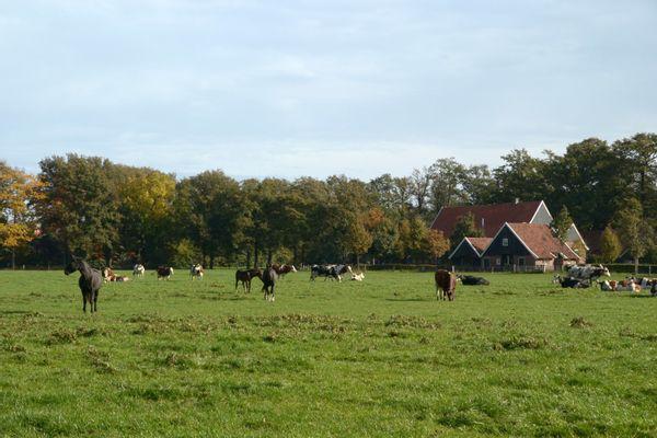 Wandelen in Twente (boekrecensie)