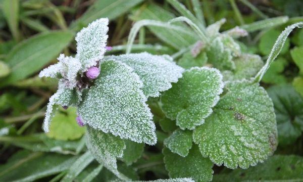 De vijf Groenbezig wintertips