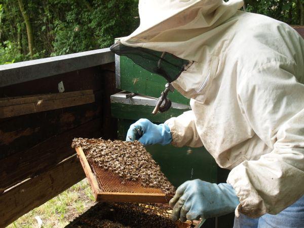 De imker en de honinggraat