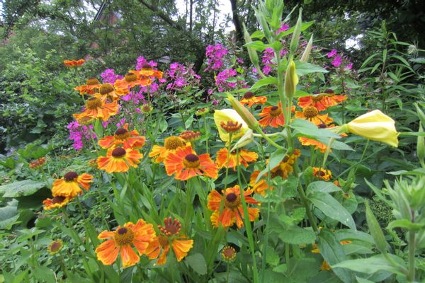 Picknick-set voor de Vlindertuin in de Kinderboerderij Ommen