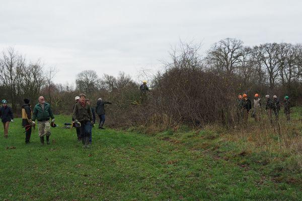 Vliegende brigade aan de slag voor boomkikker!